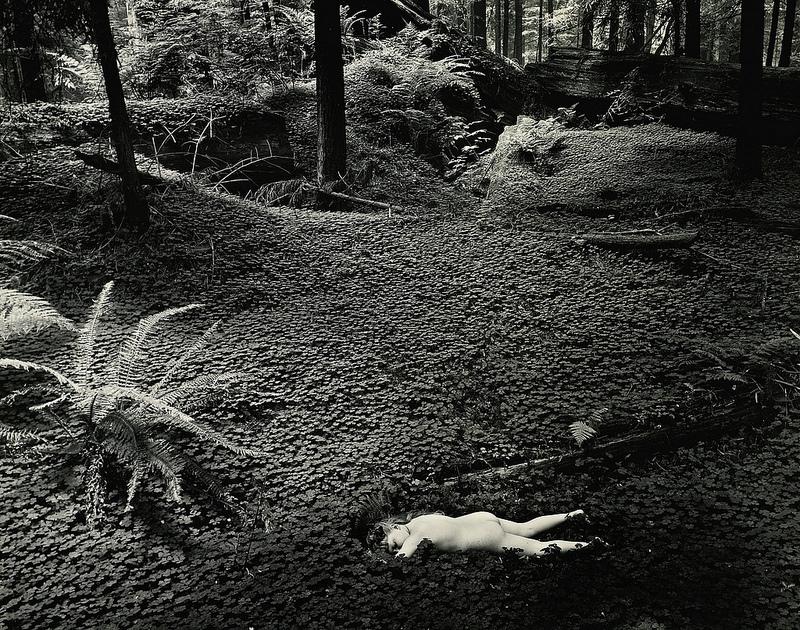 Modern photographers. Courses. Wynn Bullock