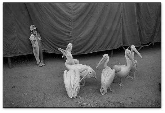 Photography courses and workshops - Indian Circus - Marry Ellen Mark (6)