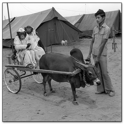 Photography courses and workshops - Indian Circus - Marry Ellen Mark (5)