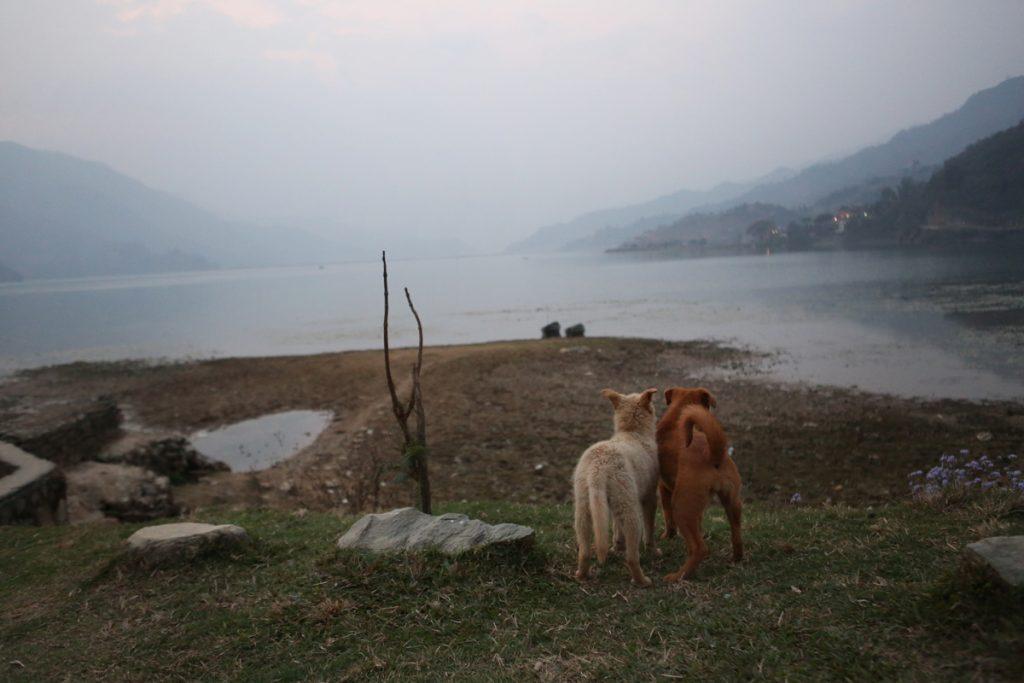 Nepal.choice2222